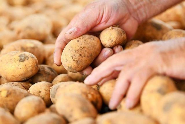 In Ühlingen gibt es jetzt Kartoffeln für die Allgemeinheit