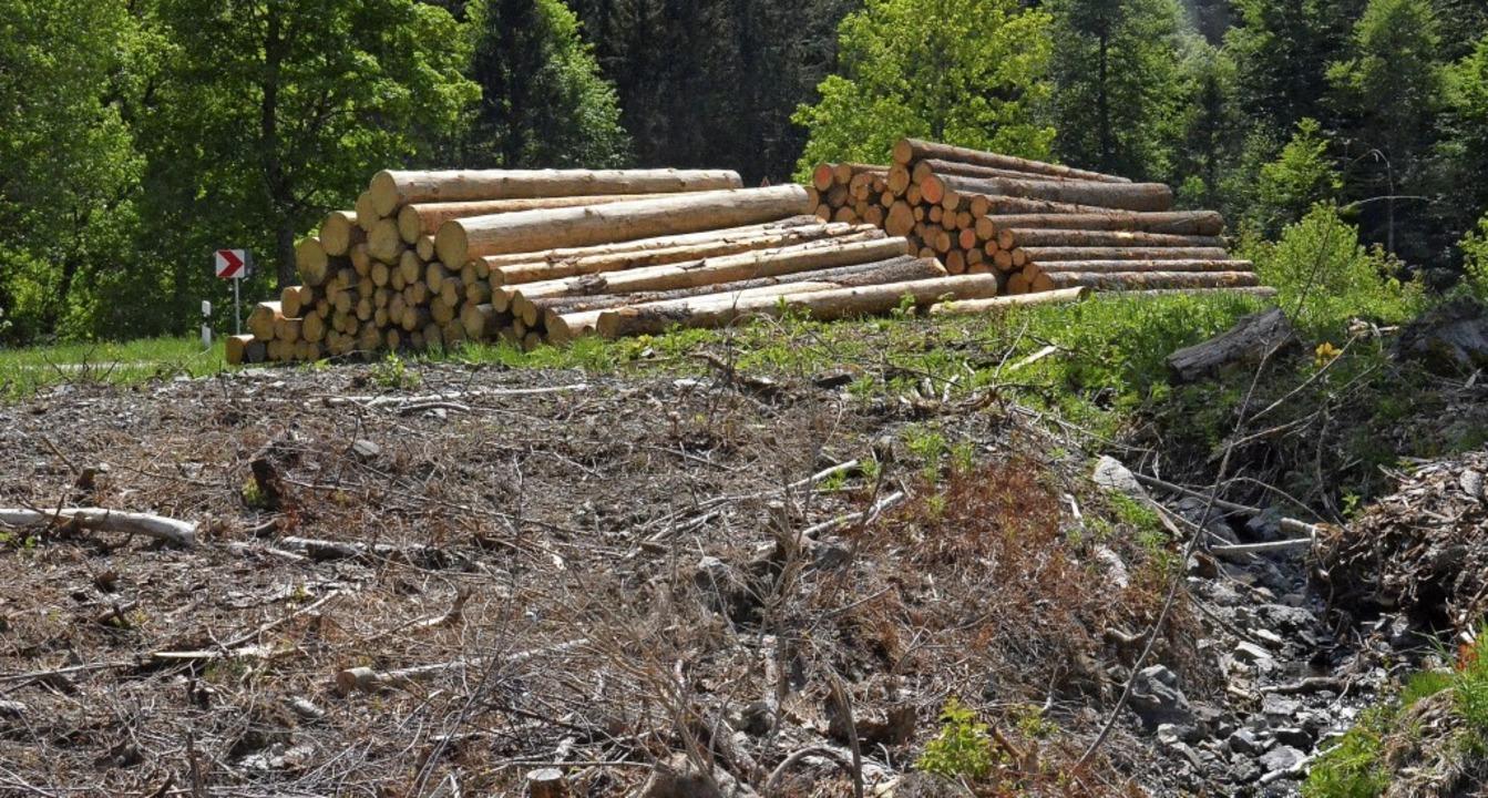 Der neueingerichtete Lagerplatz Wacht ...r noch wenig Holz liegt derzeit dort.   | Foto: Sebastian Barthmes