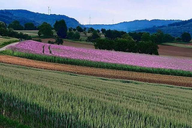 Felder im Frühling bei Hohberg