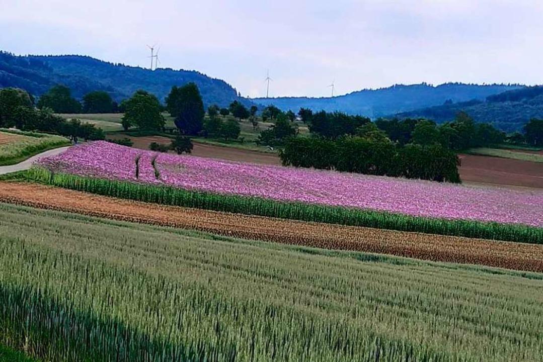 Felder im Frühling bei Hohberg  | Foto: Kurt Heitz