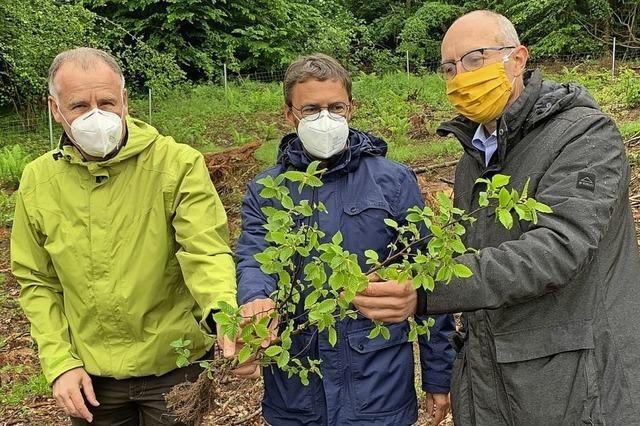 4450 Baumsetzlinge für den Ehrenkirchener Wald