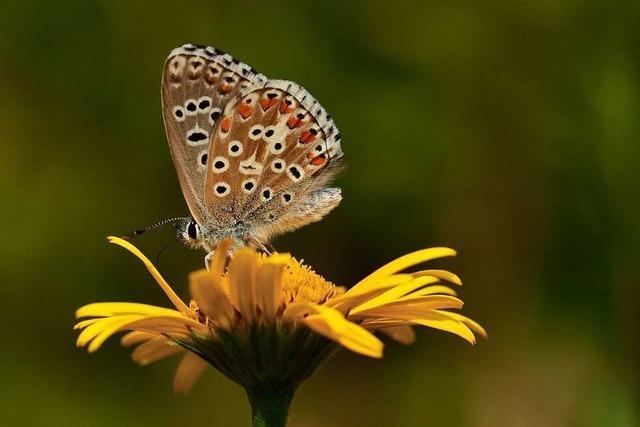 In der Wutachschlucht zeigen Flora und Fauna ihre Vielfalt