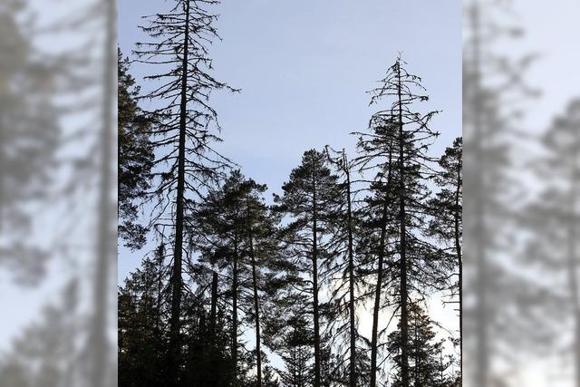 Im Wald drängt die Zeit