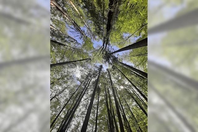 Bäume wachsen in den Himmel...