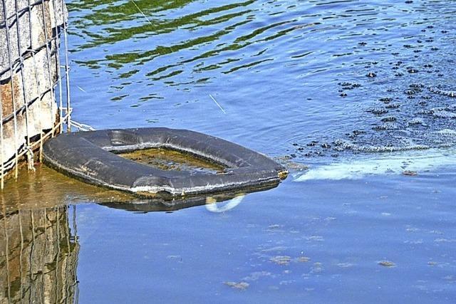 Wie soll der See von den Algen befreit werden?
