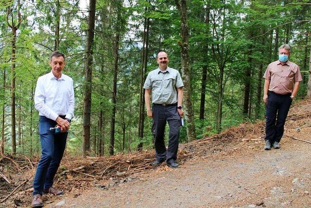 Die großen Waldschäden belasten die Todtnauer Stadtkasse enorm
