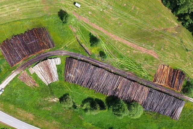Der Forst nimmt ein Nasslager für Sturmholz bei Tegernau in Betrieb