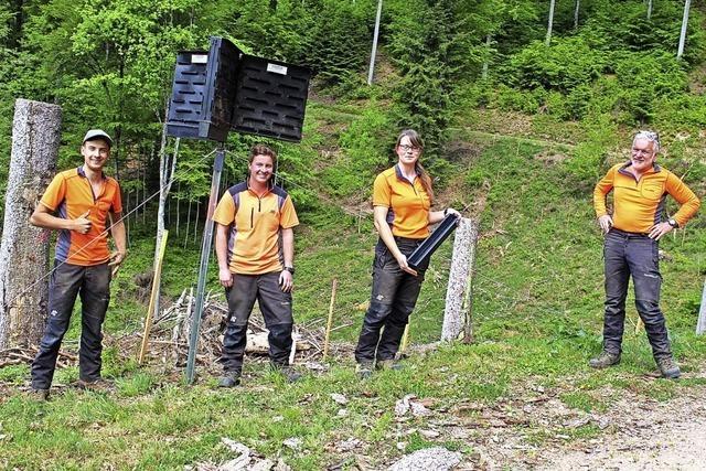 Nachwuchs für den Forst
