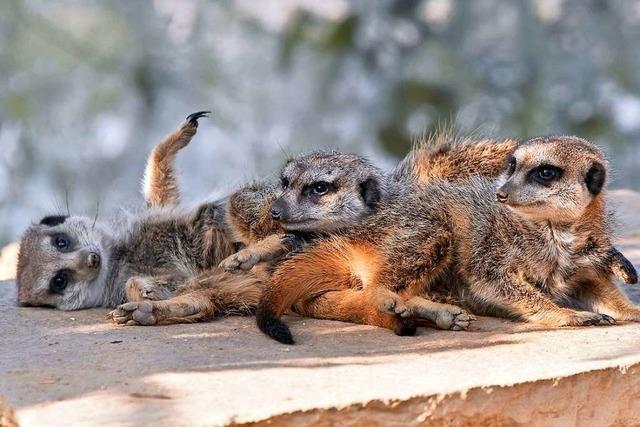 Mundenhof stellt weiterhin Tiere für Videokonferenzen zur Verfügung