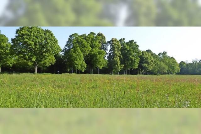 Schutz für Haselwald-Spitzmatten