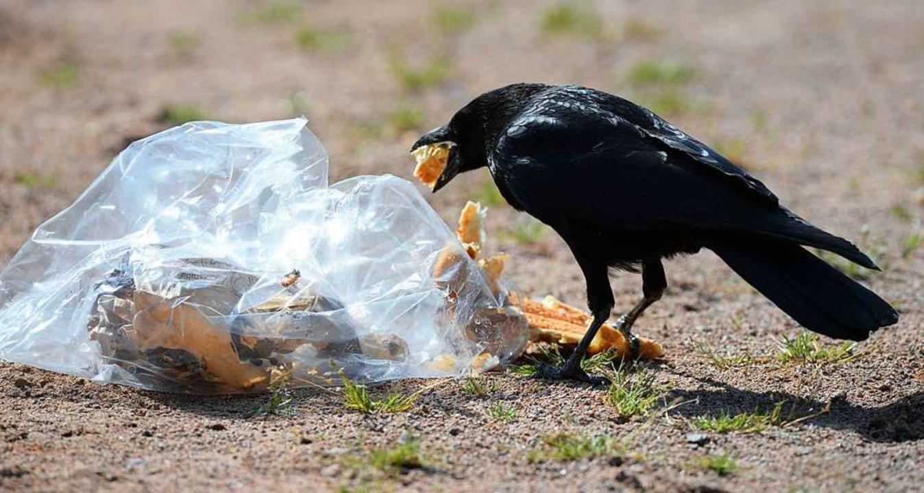 Manche lassen ihren Müll einfach liegen – die Krähe freut's.  | Foto: Patrick Seeger