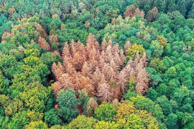 Kreisforstamt beschreibt Situation des Waldes als dramatisch