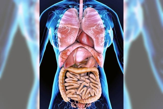 Forschung am offenen Magen