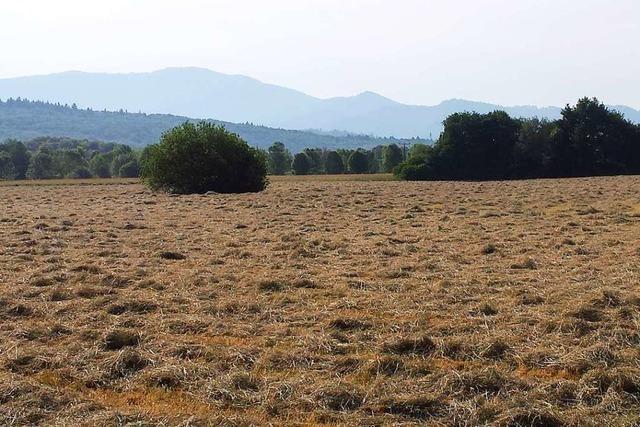 Haselwald-Spitzmatten darf nun endgültig nicht bebaut werden