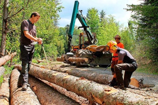 Der Klimawandel hat tiefe Spuren im Oberrieder Forst hinterlassen