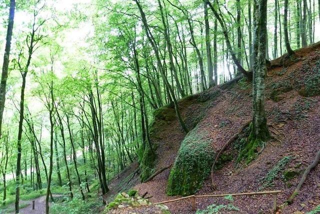 Der Walderlebnispfad bei Kandern macht Wandern zum Erlebnis