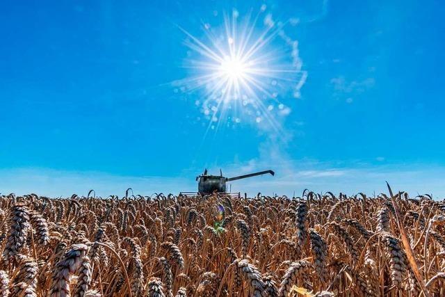 Agrarsubventionen: Je größer die Fläche, desto mehr Geld fließt