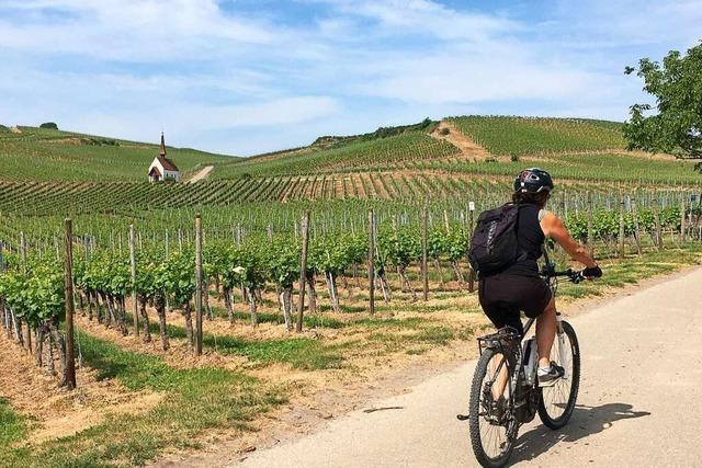 Zweite Etappe des Badischen Weinradwegs führt durch die Reben am Kaiserstuhl