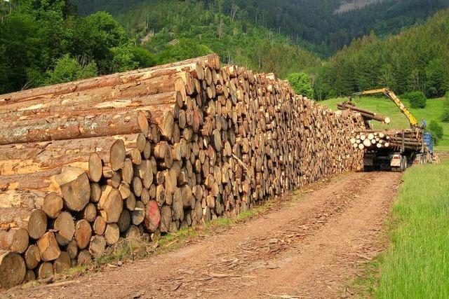 Das neue Todtnauer Nasslager für Baumstämme ist umstritten