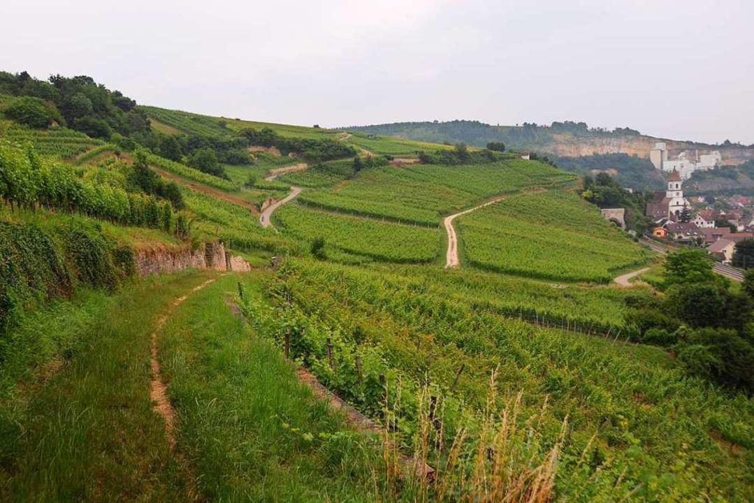 Das Weingut Kalkwerk in Istein stellt auf biologischen Weinanbau um.  | Foto: Victoria Langelott