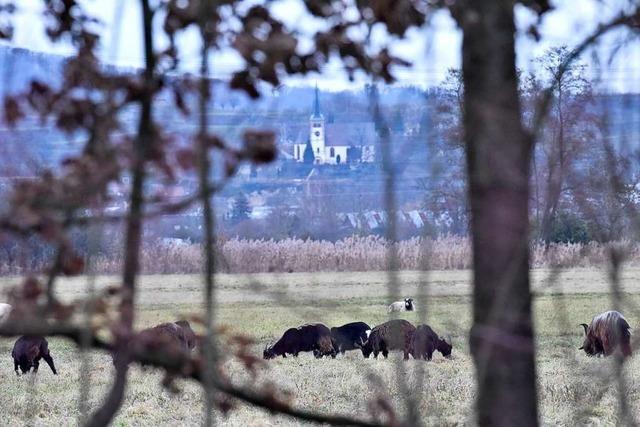 Freiburg kauft für 4 Millionen Euro Ökopunkte von Bahlingen für den Stadtteil Dietenbach