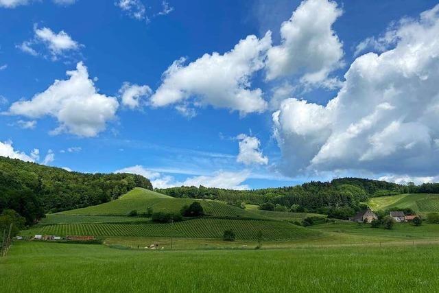 Auf der dritten Etappe des Weinradwegs geht's durch Winzerdörfer und Freiburg