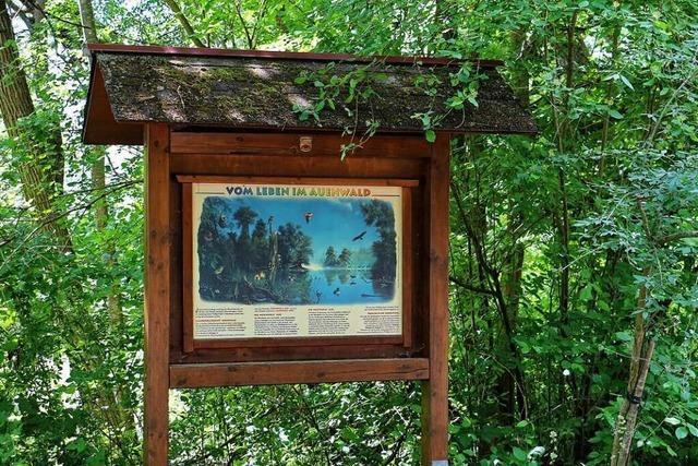 Der Naturlehrpfad in Wyhl wird 50 Jahre alt - und bekommt eine Verjüngungskur