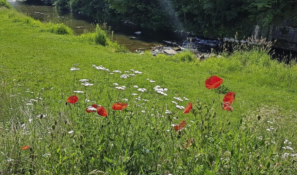 Blumenwiese am Brettenbachufer  | Foto: Gerhard Walser