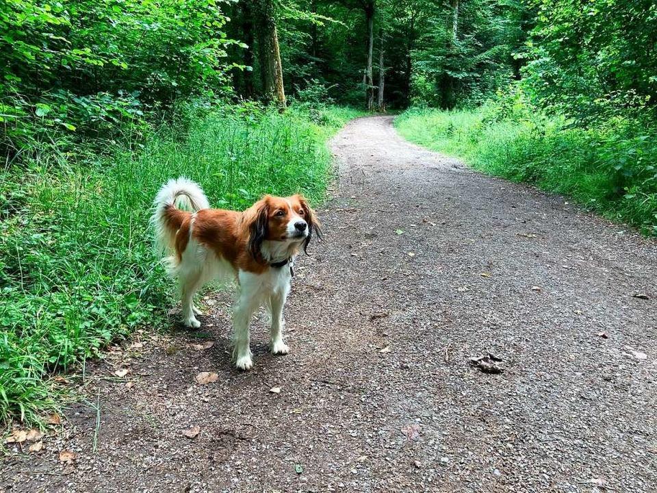 Gesund und munter ist dieser Hund. Doc...n, zum Beispiel an und in Fuchsbauten.  | Foto: Nina Herrmann