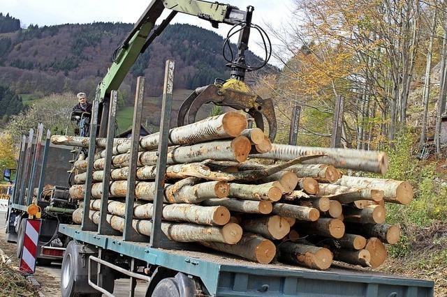 Minister streiten über Schadholztransporte
