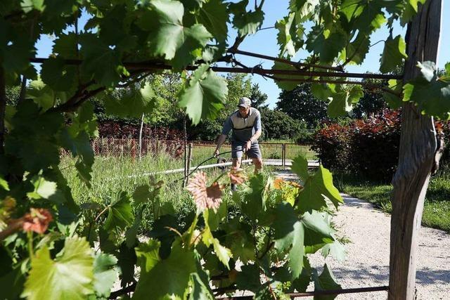 Im Kleingartenpark ist ein kleines Paradies entstanden − es mangelt aber an Helfern