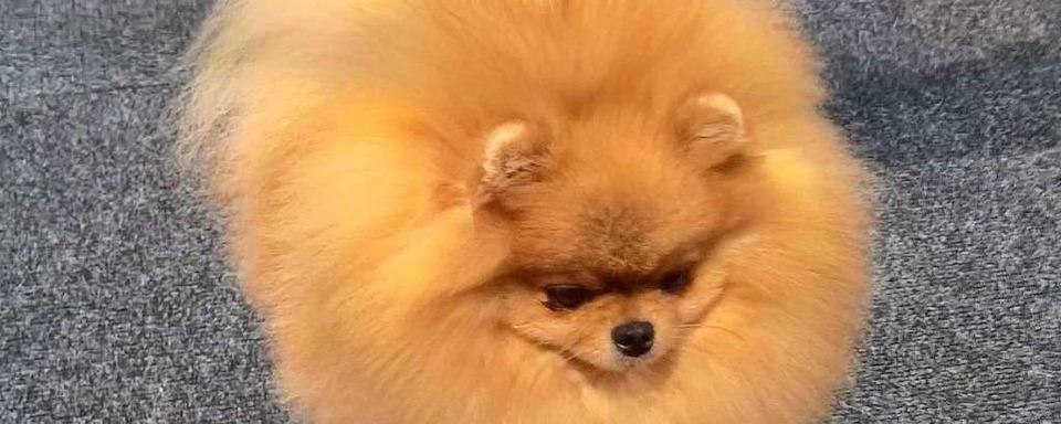 Illegaler Handel mit Hundewelpen aufgeflogen