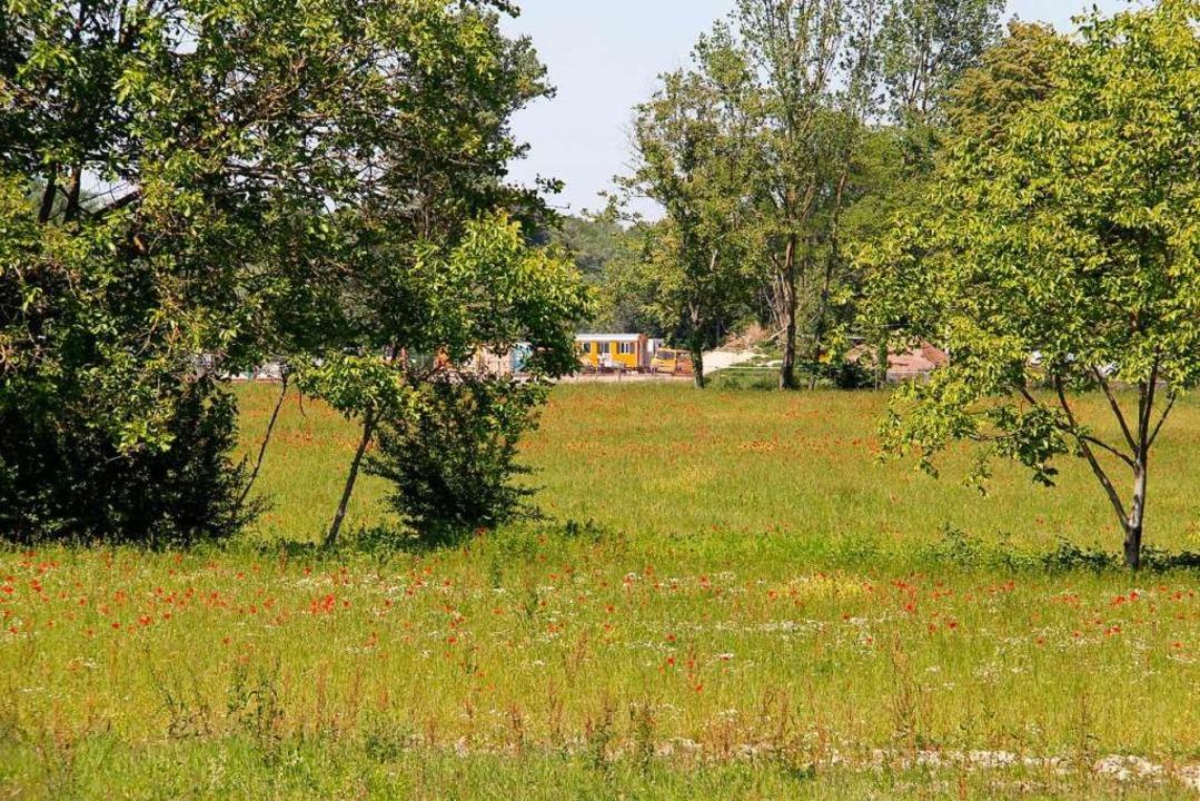 Auf dem LGS-Gelände laufen die Bauarbe...ge Rheinwiese mit alten Baumbeständen.    Foto: Alexander Huber