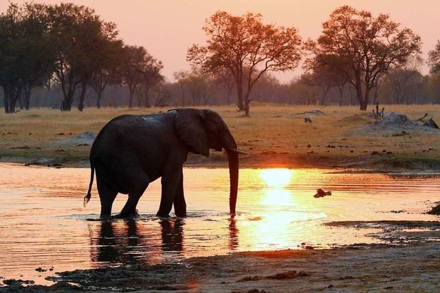 Die Pandemie trifft den Safari-Tourismus – und die Schutzgebiete