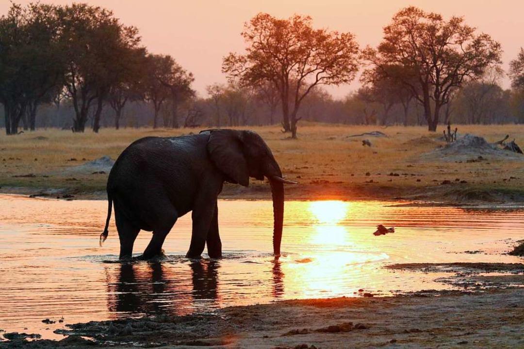 Auf einer Safari Elefanten beobachten – momentan ist das unvorstellbar.  | Foto: Winfried Schumacher