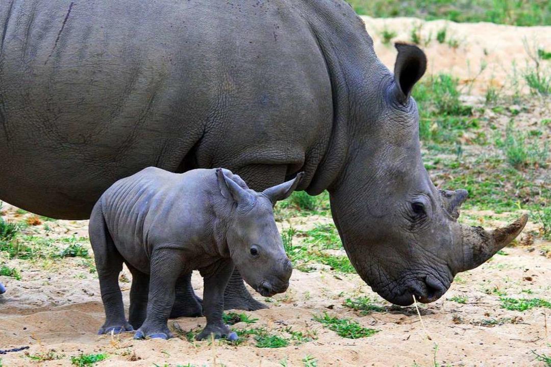 Ein Nashornjunges mit seiner Mutter  | Foto: Winfried Schumacher