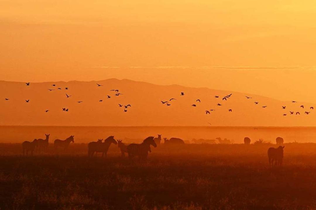 Abendstimmung auf Safari  | Foto: Winfried Schumacher