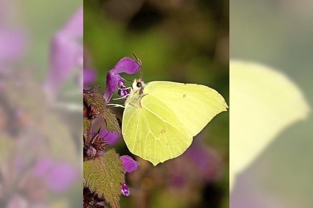 Langzeitprojekt für die biologische Vielfalt