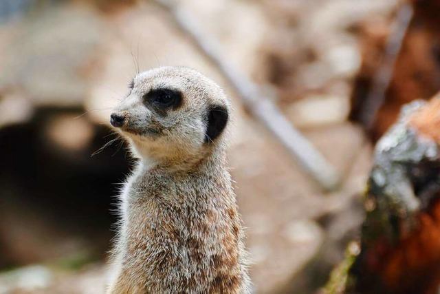 Zoo Basel hat nach der Coronapause besonderen Nachwuchs