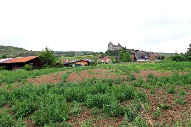 Burkheim bekommt neues Gewerbegebiet