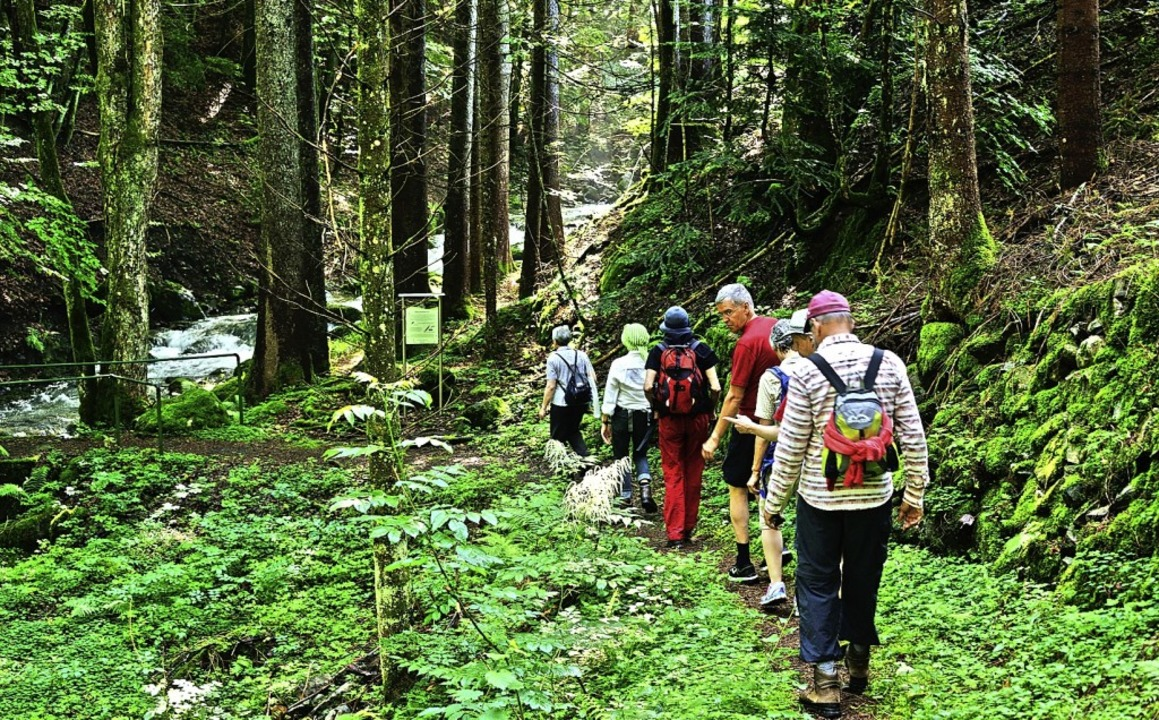 Am besten wandert es sich auf markierten Wegen.    Foto: Thomas Stephan/Biosphärengebiet Schwarzwald