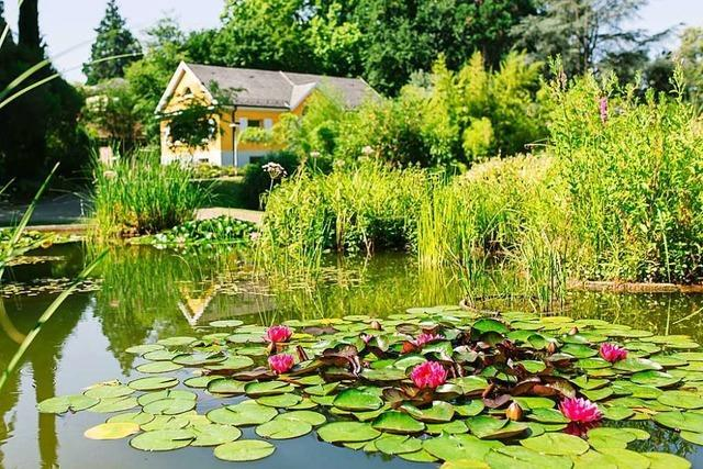 Warum Freiburgs Botanischer Garten noch geschlossen bleiben muss
