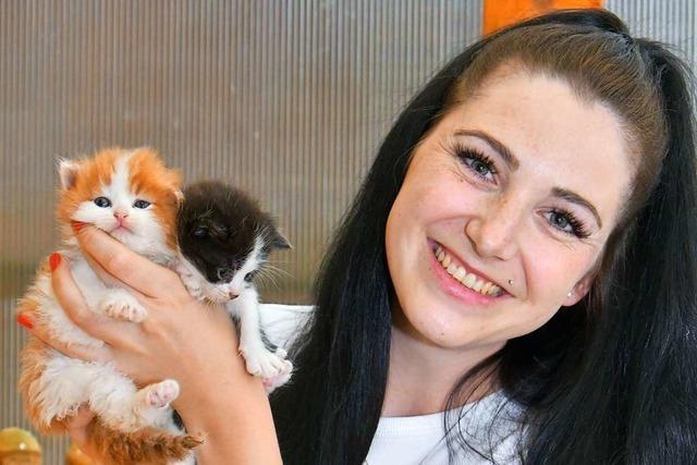 Emmendingerin rettet Hunderte Kätzchen im Jahr