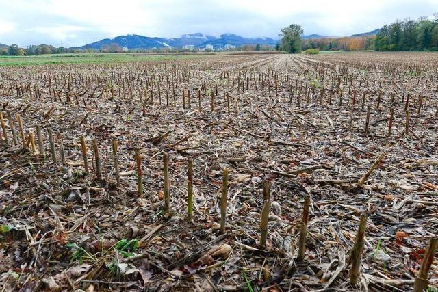 Dietenbach und Landwirte: Ein Problem, das man nicht beschönigen kann