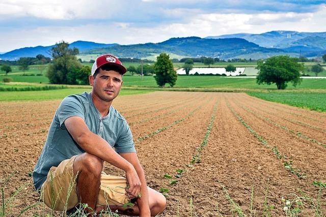 33 Landwirte in Freiburg müssen Pachtflächen an Dietenbach-Bauern abgeben