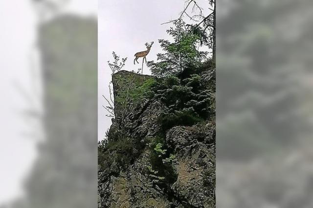 Hirsch thront überm Wehratal