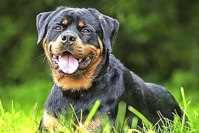 Spaziergängerin findet toten Rottweiler-Hund im Stadtwald