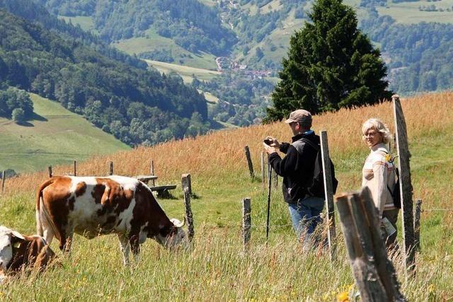 Der Panoramawanderung in Obermünstertal eröffnet tolle Aussichten