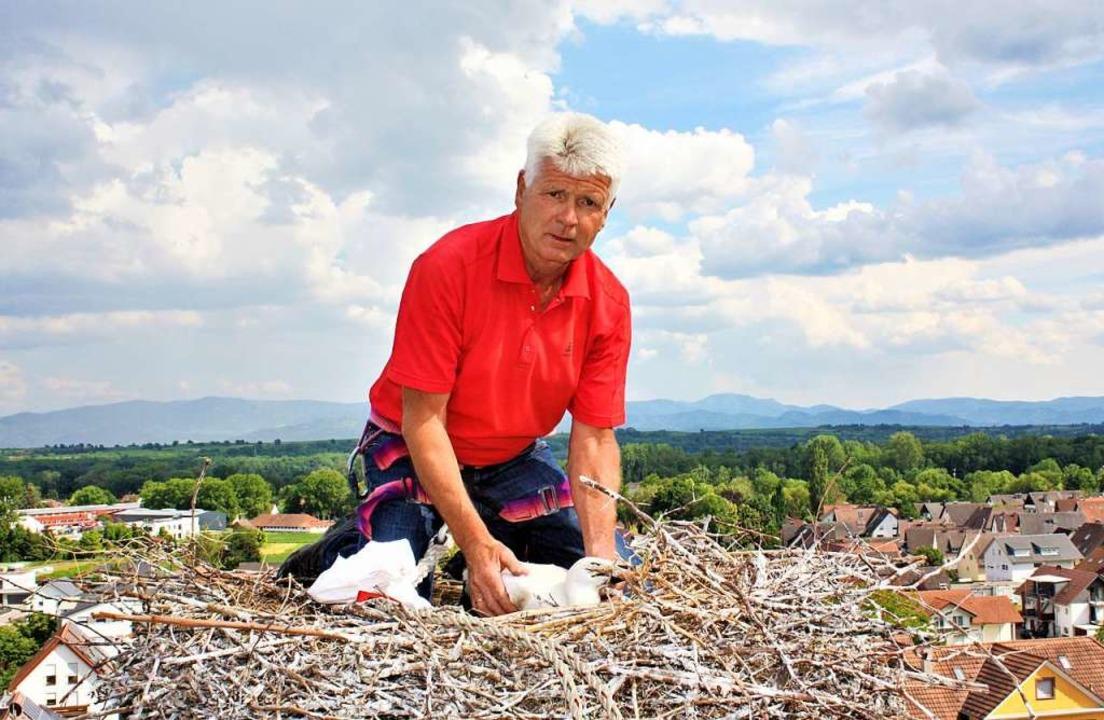 Ortsvorsteher Alois Lai hat den jungen Storch bei bester Aussicht beringt.  | Foto: Laetitia Barnick