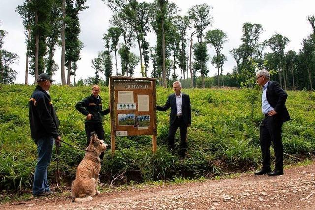Infotafeln sollen Besonderheiten des Müllheimer Eichwalds erklären